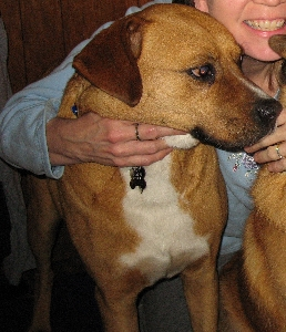 SPCA Serving Allegany County    Stories